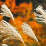芝生の雑草の種類を知ろう(2) | イネ科雑草対策はここに注意