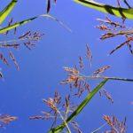 芝生の雑草の種類を知ろう(1) | プロが教える芝生の除草剤選びのコツ