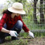 雑草対策に便利な草刈り道具