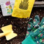 お庭の芝生の雑草対策、できるだけ手軽にできる方法5つ(その2)