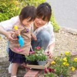 お庭の芝生の雑草対策、できるだけ手軽にできる方法5つ(その3)